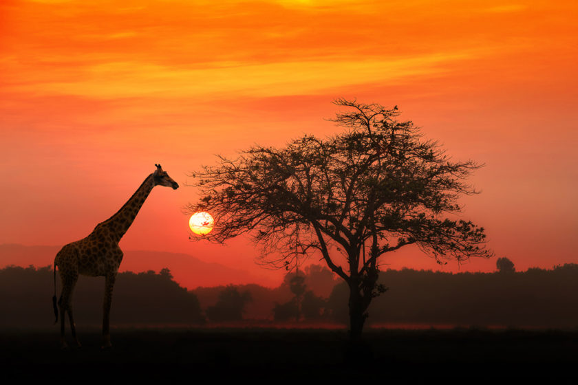 6 - Safari Reisetipps zu Planung