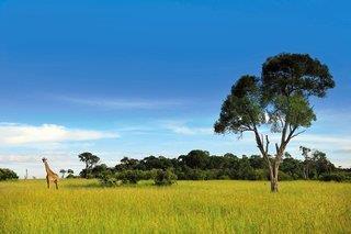 Kenia Safari-Abenteuer + Baobab Beach Resort 4,5*